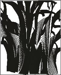 Arboricultura_doctorarbol consultoria
