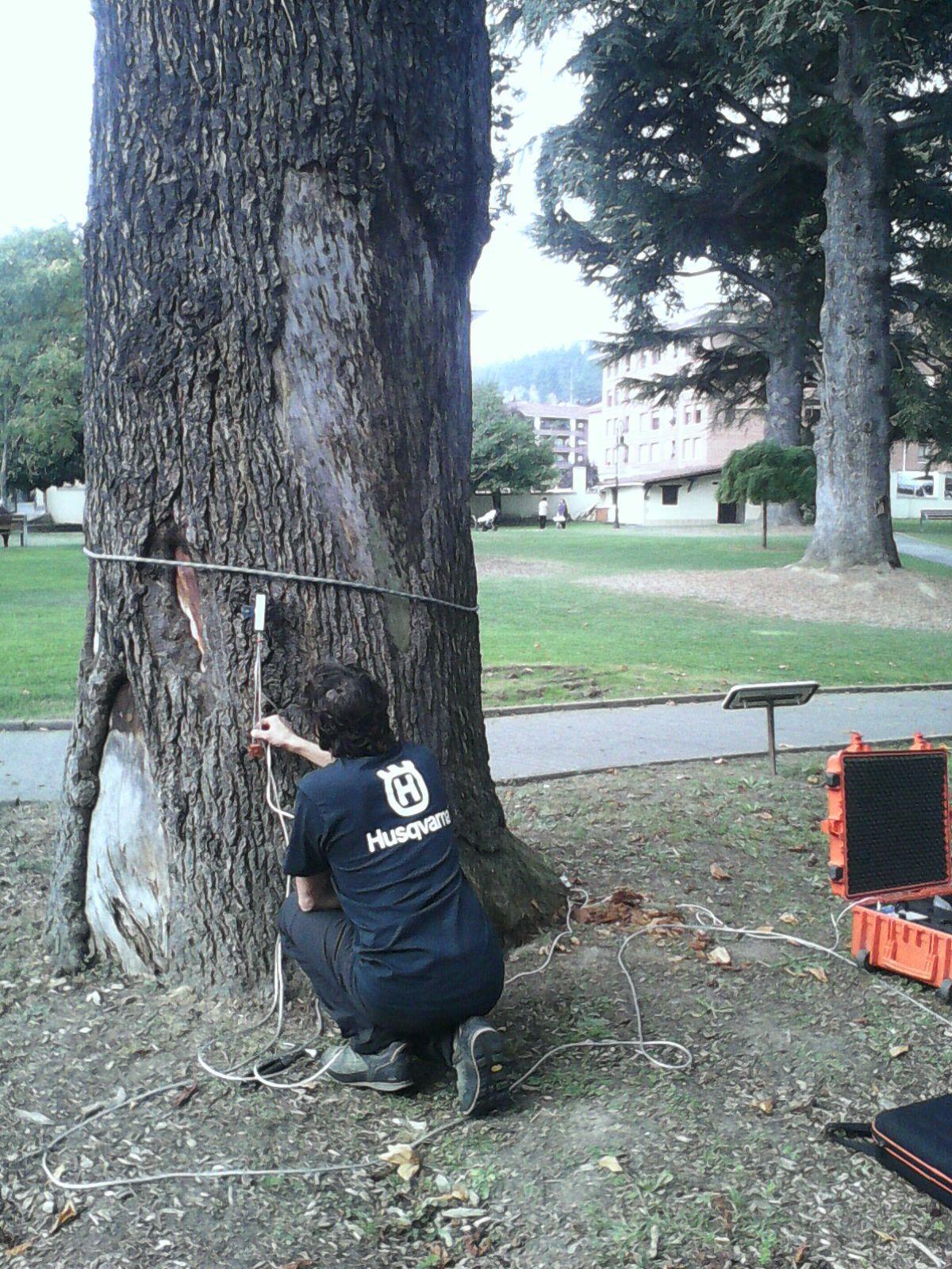 risc de caiguda arbres